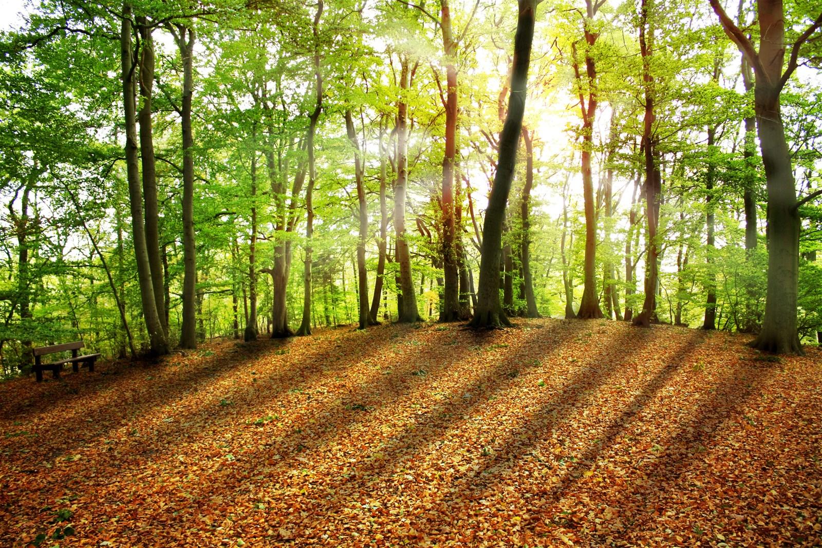 Friedwald - Zurück zur Natur